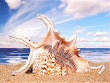 #Spider Conch Shell