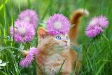Red kitten with cornflowers