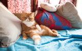 Cat-animals-pet