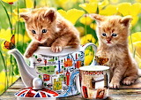 Kittens Tea Time