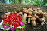 Ягоды-грибы