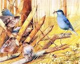 #Blue Birds on a Broken Fence