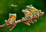 The-frog-companions
