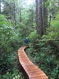Tofino rain forest