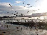 Brighton pier-england