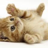 Cute kitty's jelly beans