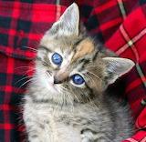 Nice Blue Eyes...