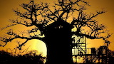 house in a baobab