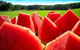 Watermelon_jliba_ncsa