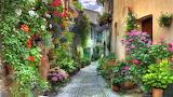 beautiful flower walkway