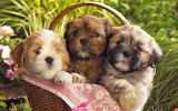 ~Three Cute Puppies~