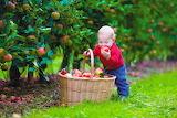 healthy food-taste of autumn