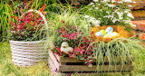 ^ Nandina Containers For Easter Morning