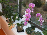Two Orchids and a Gardenia in bloom