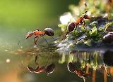 Ant-macro