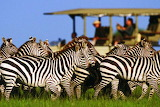 Zebra-KeepInGrp