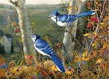 Blue Jays~ SamTimm