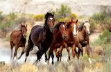 Wild Horses (17)