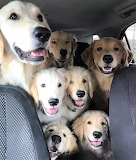 We Get To Go For A RIDE