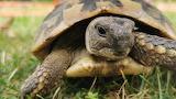 Schildkrötenbesuch
