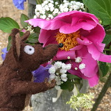 Minimus with flower