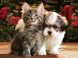 Adorable Kitten and Puppy