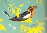 Art bird