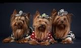 ☺ Three cuties...