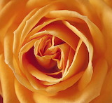 Rotate the rose