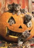 Kitties in a pumpkin