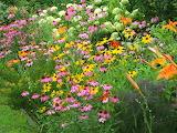 butterfly garden, Texas