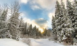 Winter Forests Sky Snow 462055