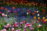 spring-garden-with-tulips-garry-gay