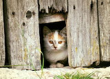 Gatera - Cat Flap