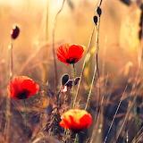 ~Summer Meadow~
