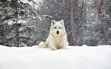 Animals wildlife nature (345)
