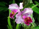 Foto de flor orquidea 13