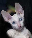 I 'Ear' You !
