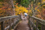 Bridge, walkway, forest, trees, person, yellow foliage, autumn
