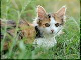 January-6-kitten
