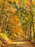 Fall Road