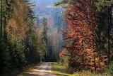 Kolorowa jesień-foto-Wojtek Kaczówka Fotografia