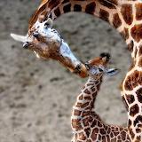 Kiss...