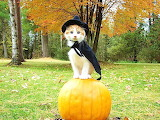 1halloween kitten