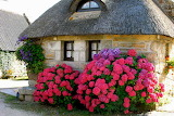 Cottage with hydrangea