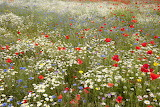 Wildflower meadow ©Paul Hobson
