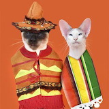 Cinco de Mayo Gatos