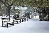 Winter - benchs
