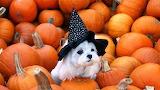Definitely Halloween