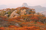 Rocks on Firey Bushes